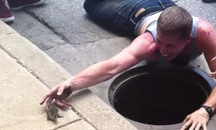 Ryzykowała życie, żeby uratować kaczuszkę