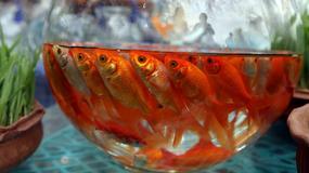 Złota rybka jako prezent czyli Novruz (Nowy Rok) w Iranie - zdjęcie dnia