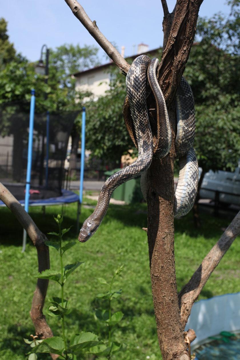 Wąż na posesji