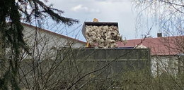 Miliony ptasich zwłok, mieszkańcy zrozpaczeni. Nie ma gdzie grzebać chorych zwierząt