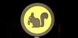 Uwaga na dziki i wiewiórki! Burmistrz stawia w mieście nowe znaki