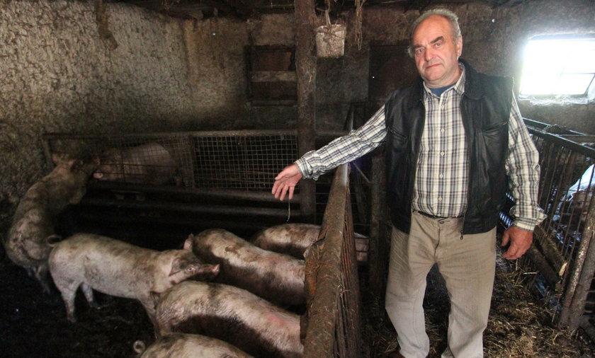 Prędzej siępowieszę, niżzabijęswoje świnie