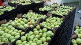 Polskie jabłka skażone? Tak twierdzą Szwedzi