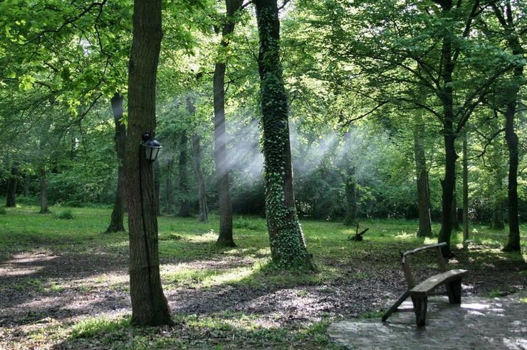 Bojčinska šuma