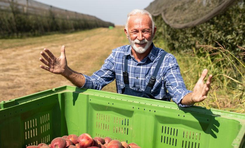 Dłuższa praca zamiast emerytury? Rząd kusi seniorów niższymi podatkami