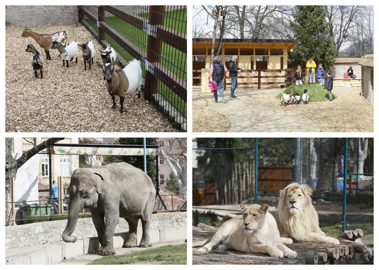 zoo vrt kombo