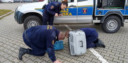 Strażnicy ratowali kunę