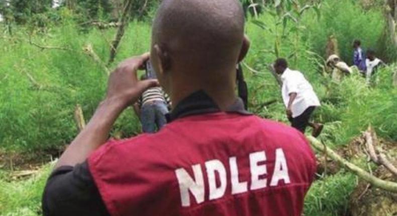NDLEA impounds 4,000Kg of illicit drugs.