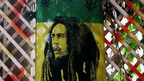 Jamajka zalegalizuje marihuanę?