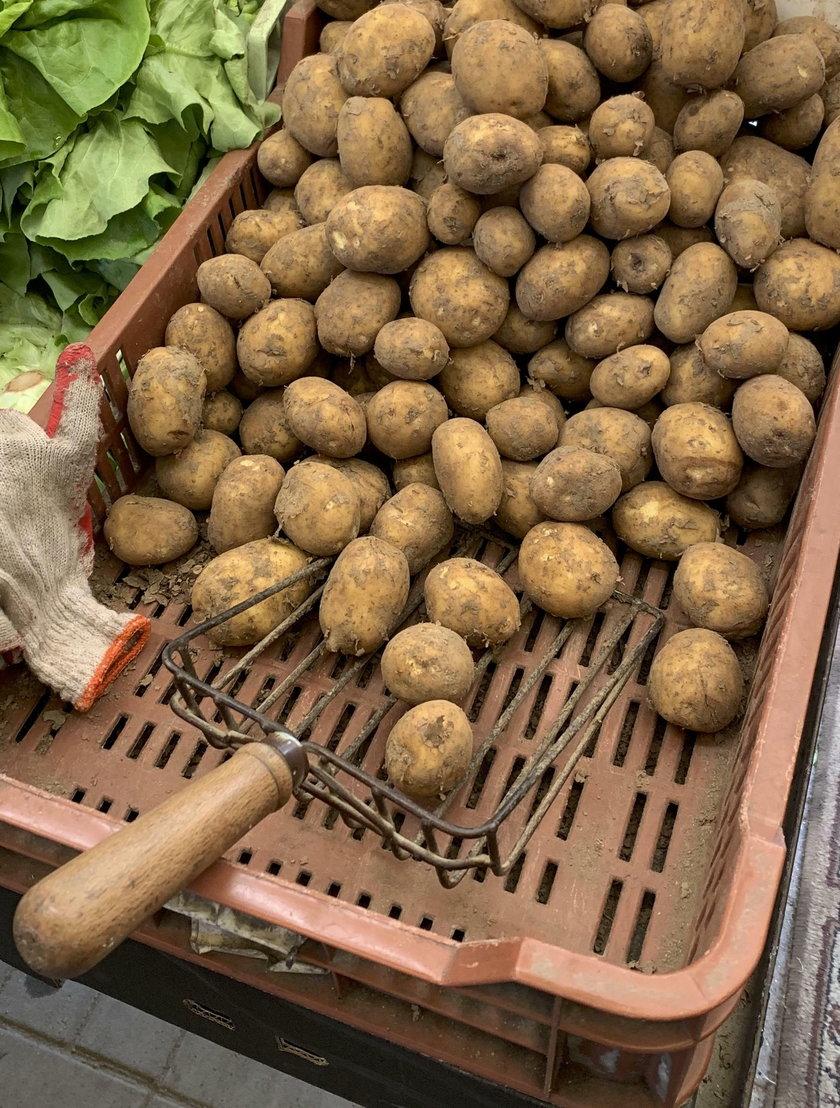 O ile dokładnie drożały ziemniaki w skupie i na targowiskach?