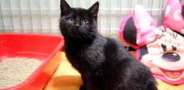 Motorniczy uratował kotka. Nazwali go jego imieniem