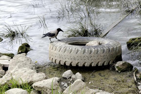 Gume o drugo đubre u Dunavu nisu retka slika