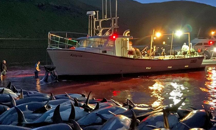 Grindadrap, czyli rzeź delfinów na Wyspach Owczych.