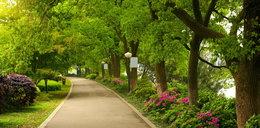 Zaprojektuj park w Branicach