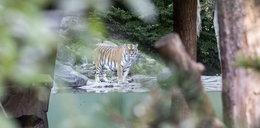 Horror w zoo! 55-latka zabita na oczach odwiedzających