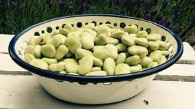 Obniża cholesterol, pomaga w odchudzaniu i jest źródłem białka