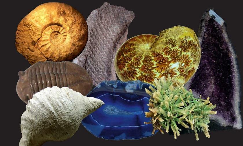 Wystawa skamieliny i i minerały