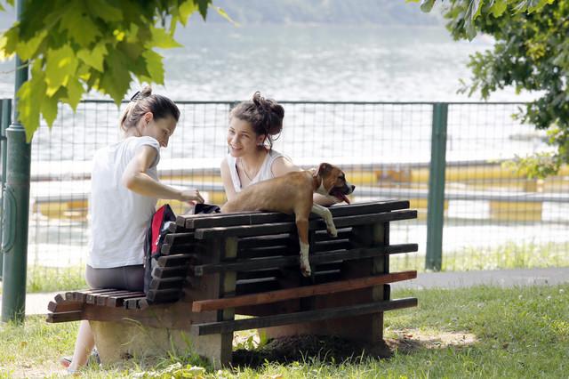 Pas kao i čovek treba da bude u hladovini i da pored sebe ima dovoljno vode