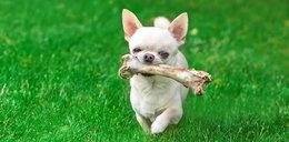 Dajesz to psu do jedzenia? Może umrzeć