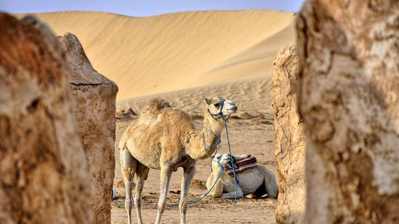 Tunezja - nie tylko na wakacje