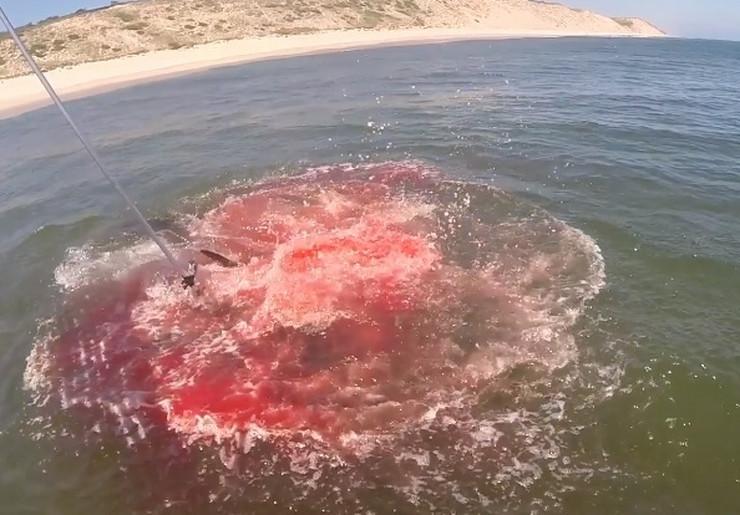krv more