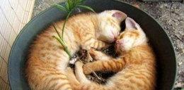 Gdzie koty sypiają