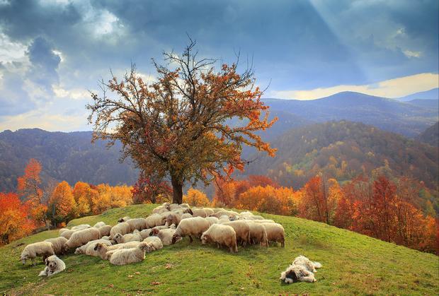 Transylwania jesienią