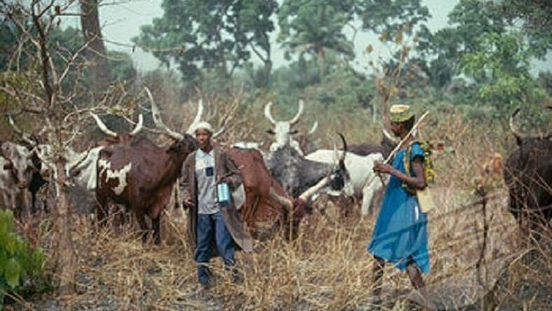 Herdsmen will soon be learning on the go as FG plans to establish a radio service for them. (Sunnewsonline)