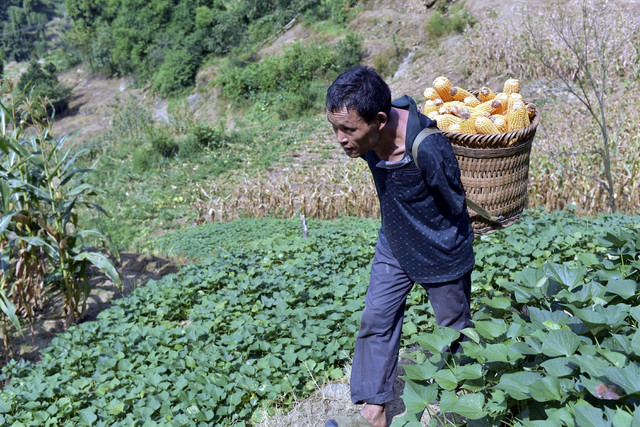 Čen obavlja sve vrste poljoprivrednih poslova