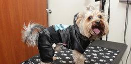 Psie ubranka. Są ok czy to chora moda?