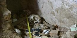 Szczątki pod wanną w domu grozy prezydenta. To ofiary tortur?