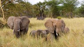 Atrakcje Kenii - safari w rezerwacie Samburu