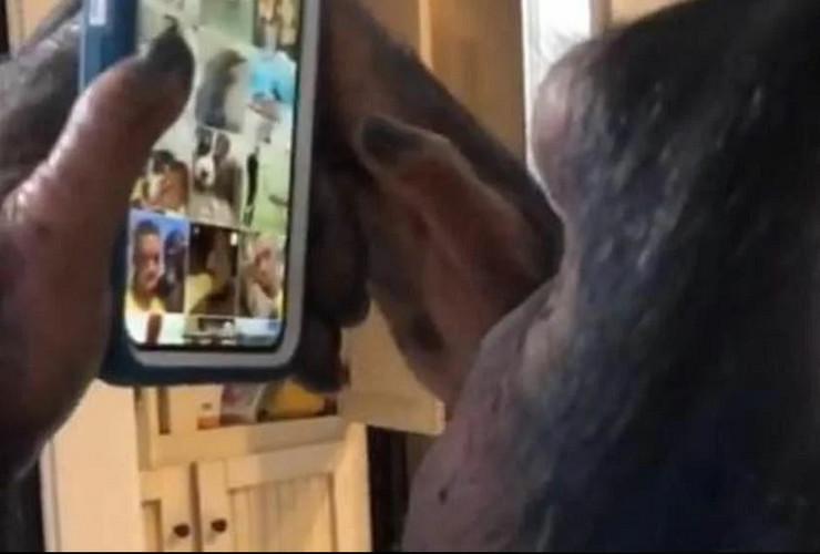 Šimpanza instagram