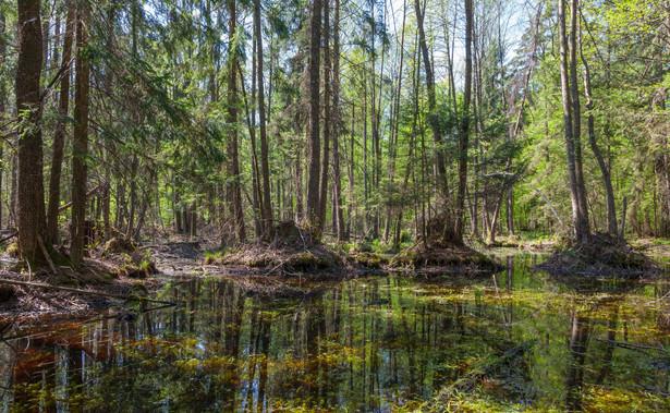 Jak tłumaczy WWF, aneksy mają pozwolić Lasom Państwowym na powrót do wycinek