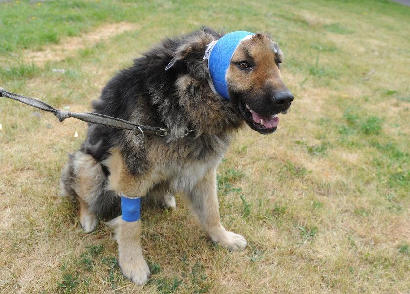 Policjant przygarnął psa, którego uratował przed śmiercią