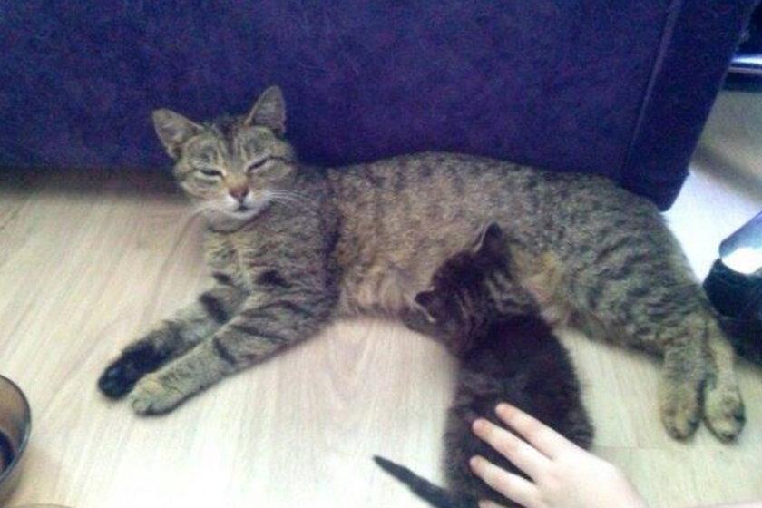 Kotek w potrzasku. Uratowali go dobrzy ludzie