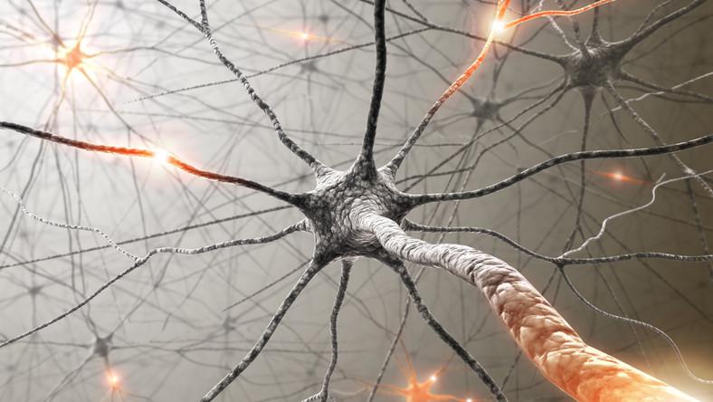 Komórki nerwowe - neurony