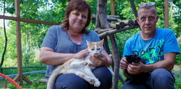 Kocie ranczo na Podlasiu. Uratowali już 300 mruczków