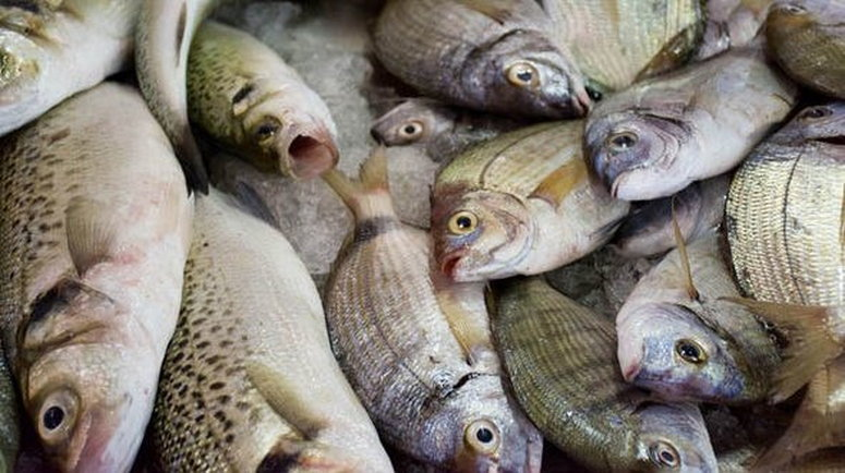 House of Reps move to ban importation of fish