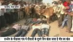Korida na indijski način: Muškarci mirno leže na ulici dok se STAMPEDO KRAVA približava