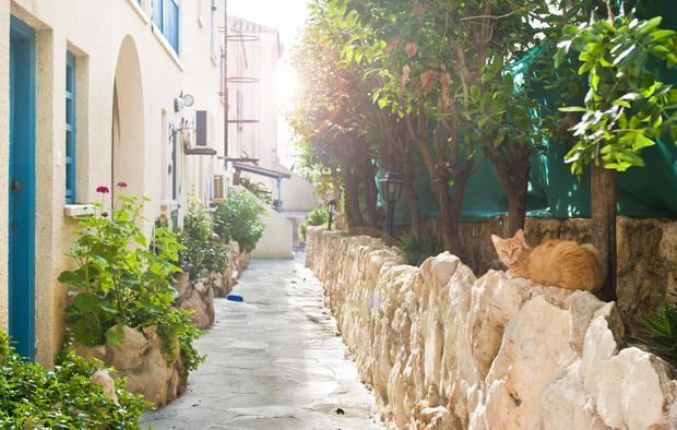 Kot przy jednej z cypryjskich uliczek