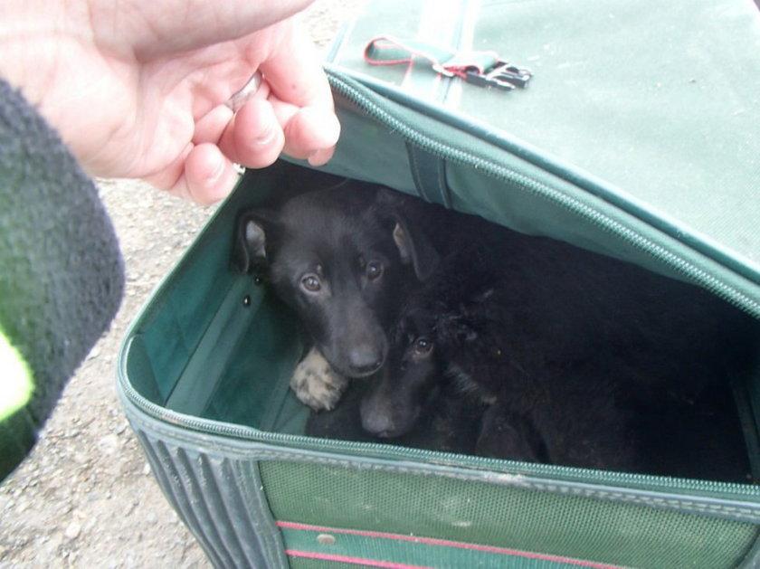 Pieski zamknięte w walizkach. Kto je porzucił?
