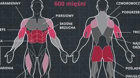 Jak powstają mięśnie? [INFOGRAFIKA]