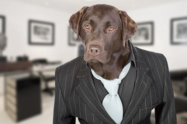 Pies w pracy