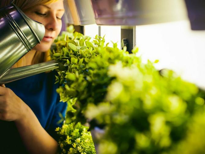 Naučnici su otkrili da jedan cvet može da pomogne u borbi protiv raka: I on raste u baštama širom Srbije
