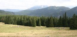Uwaga na te tatrzańskie szlaki. W weekend pielgrzymi sparaliżują ruch