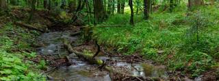 Resort środowiska: Wystarczyły dwa tygodnie zakazu wstępu do lasu, a przyroda odżyła