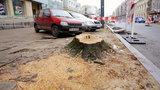 Wycięli drzewa na Piotrkowskiej