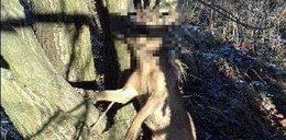 Ktoś powiesił psa na drzewie. Tuż obok schroniska...