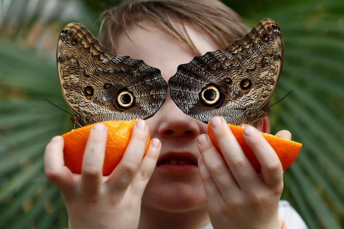 George Lewys poses with Owl butterflies during an event to launch the Sensational Butterflies exhibi
